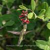 Hummingbirds 17 July 2017 -1743