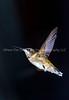 In Flight - VERT