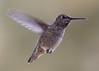 Hummingbird hovering by feeder.