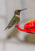 Bird-Feeder-Shadow CROP