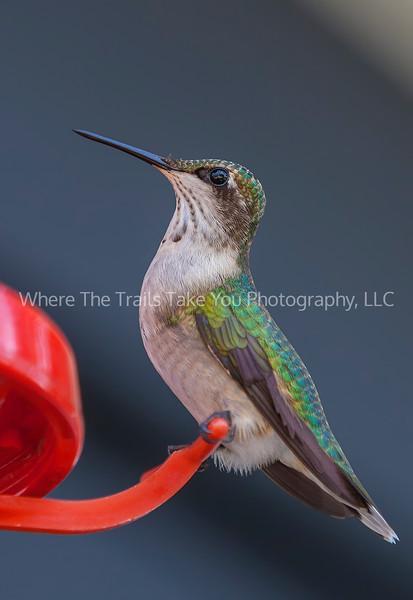 121  Beautiful Birdy