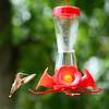 Hummingbirds Aug 2013 (13)-001