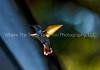 Backlit Wings
