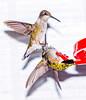 Grabbing Onto The Beak