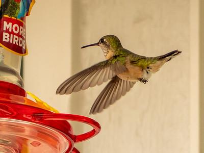Hummingbirds'18