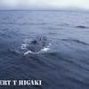 humpbacks- the dreaded blow hole