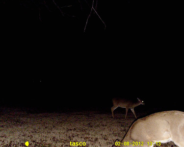 hunters deer camera