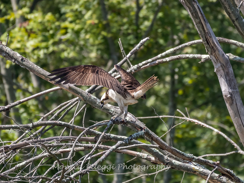 Huntley Meadows Birds 4 Sept 2017-6454