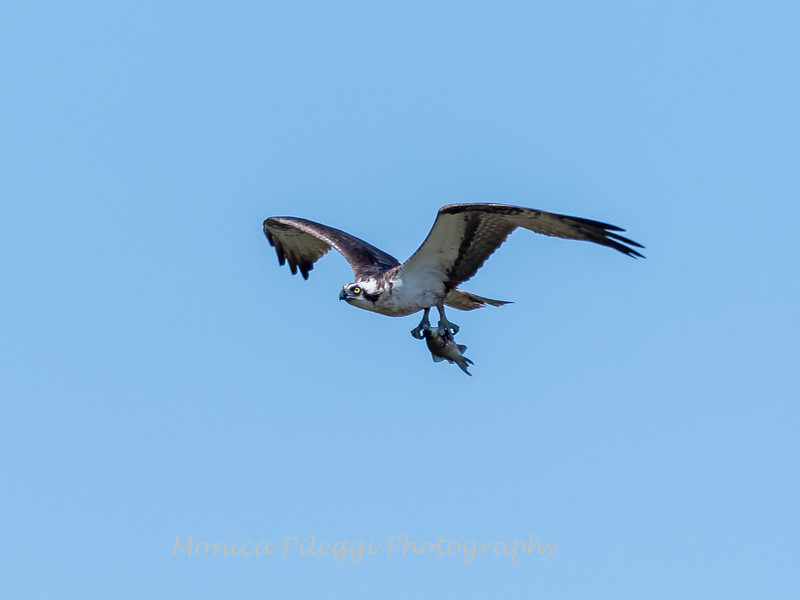Huntley Meadows Birds 4 Sept 2017-6430