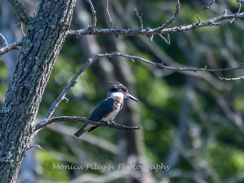 Huntley Meadows Birds 4 Sept 2017-6141
