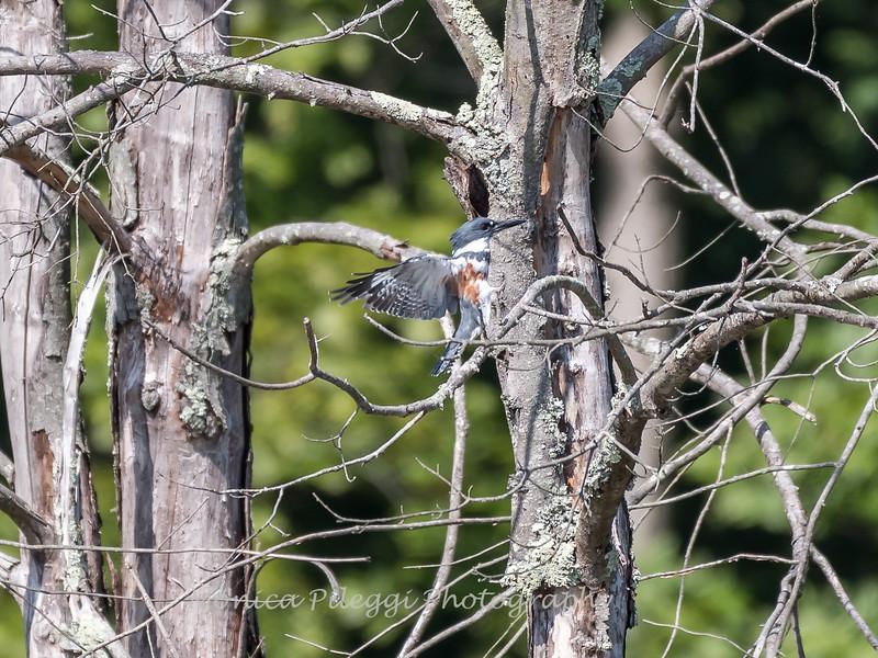 Huntley Meadows Birds 4 Sept 2017-6235