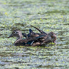 Huntley Meadows Park 16 September 2017-7979