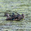 Huntley Meadows Park 16 September 2017-7980
