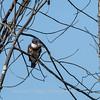 Huntley Meadows Birds 4 Sept 2017-6134