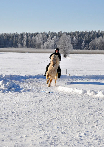 The Islandic horse competition