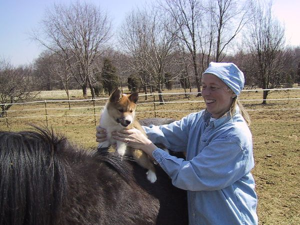 Putting the puppy on a horse: the start of a tradition.