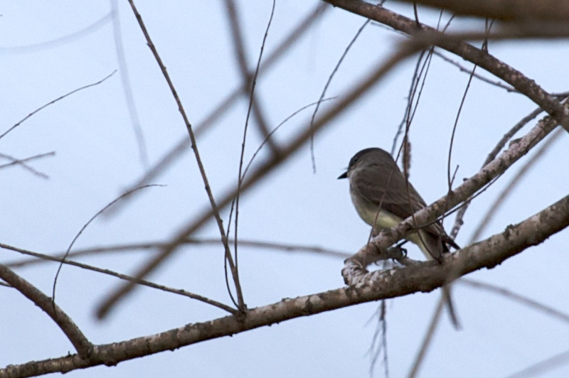 Unidentified bird in my backyard in Central Texas. It's January.