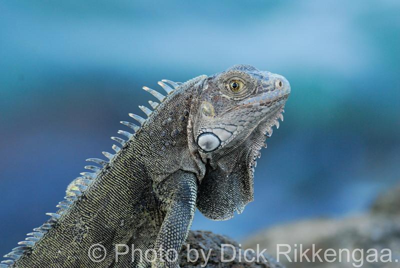2012-Sept-02-Iguana9_021