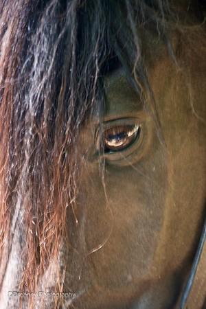Image and Phoenix - Horse Photo Session