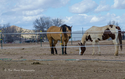 Some of the other beauties on the ranch.