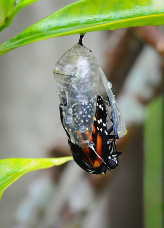 Butterfly Born 11-28-11