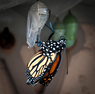Butterfly is Born 3-12-12