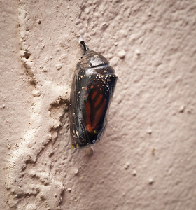 Butterfly is Born 3-16-12