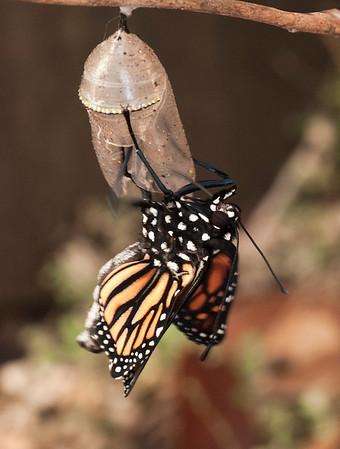 Butterfly is Born 2-8-13