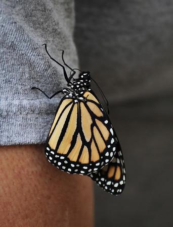 Butterfly Born 10-29-11
