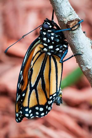 Butterfly is Born 3-1-13