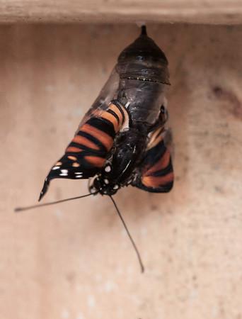 Butterfly Born 1-6-14