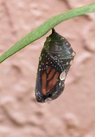Butterfly Born 10-6-15
