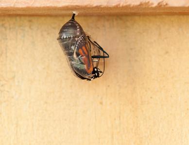 Caterpillar to Butterfly 2-27 - 3-11-14