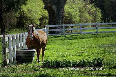 "05.21.10 = Country Life  ""Ironically, rural America has become viewed by a growing number of Americans as having a higher quality of life not because of what it has, but rather for what it does not have!""  Don Dillman"