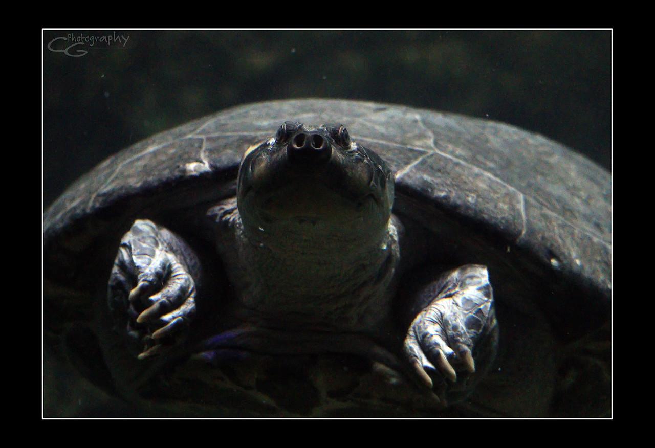 IMAGE: https://photos.smugmug.com/Animals/In-the-Wild-Yonder/i-DJBCt9n/0/eb8d099f/X2/IMG_0828-X2.jpg