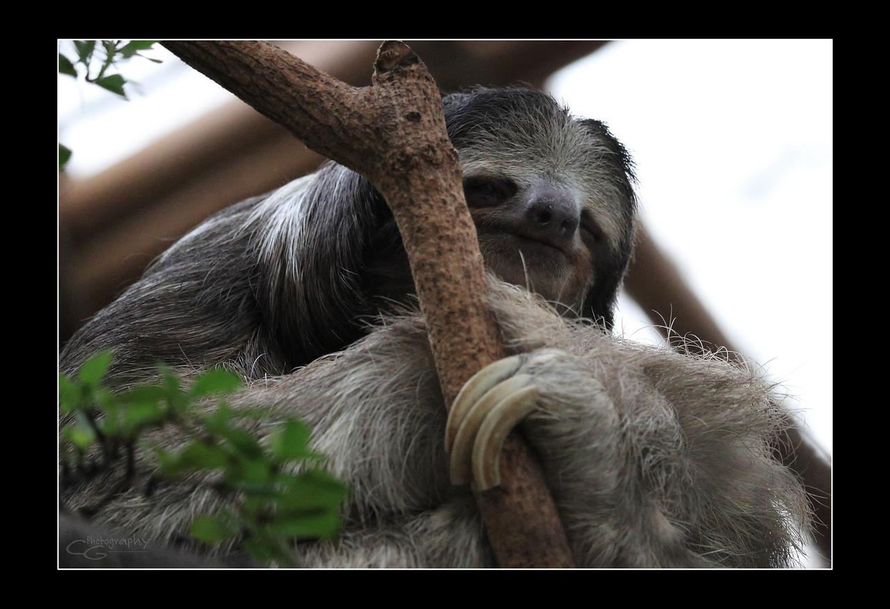 IMAGE: https://photos.smugmug.com/Animals/In-the-Wild-Yonder/i-LFS22Bz/0/b2a4b561/X2/IMG_0784-X2.jpg