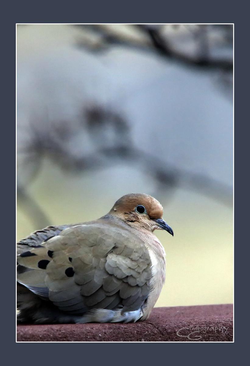 IMAGE: https://photos.smugmug.com/Animals/In-the-Wild-Yonder/i-XPbnHKW/0/X3/5P1B7753-X3.jpg