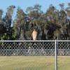 Date: 12/23/10<br /> Location: Sarasota, FL