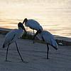 Date:  8/11/18<br /> Location:   Merritt Island, FL