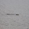 Date:  8/5/11<br /> Location:   Merritt Island, FL