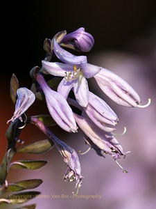 Garden_flowers_Itegem_20130804_IMG_44166_WVB_1200px