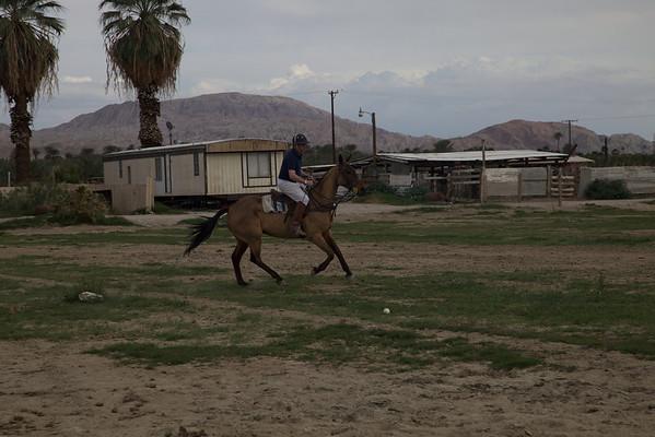 Indio Horses