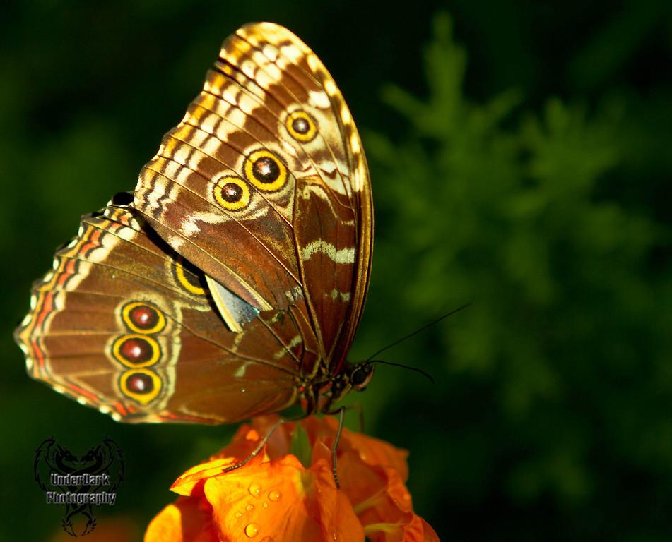 monarch2-6582