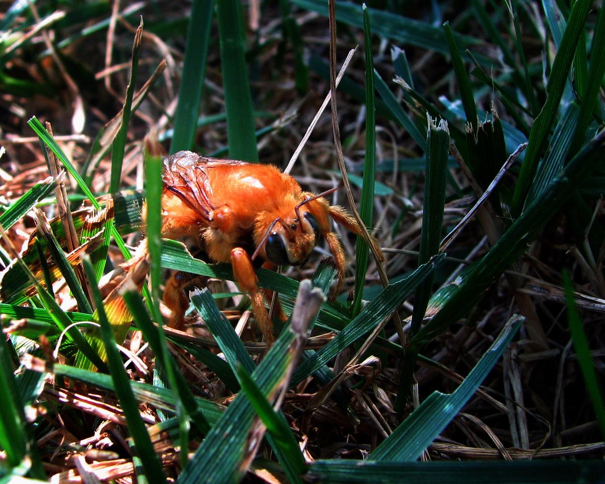 25 Bug