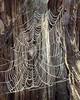 Spider Web<br /> 4/20/2010