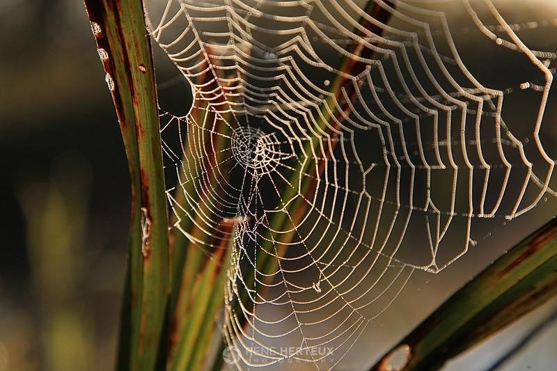 Shake off the cobwebs