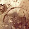'Butterfly' - Julia Grechukhina