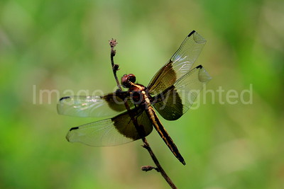 Dragonfly - 8/19/06