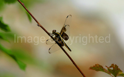 Dragonfly too