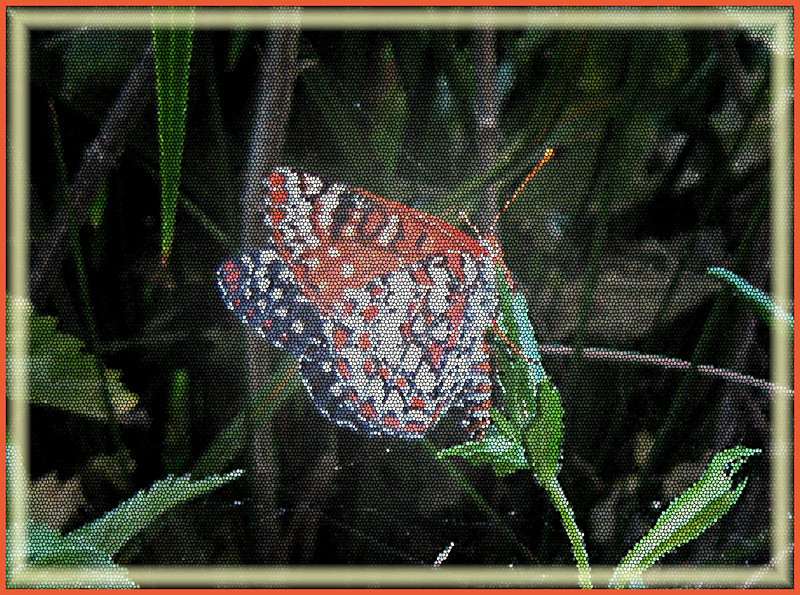 May 24, 2009 - Checkerspot Butterfly at Pinnacles National Monument, CA. (fun with photoshop)